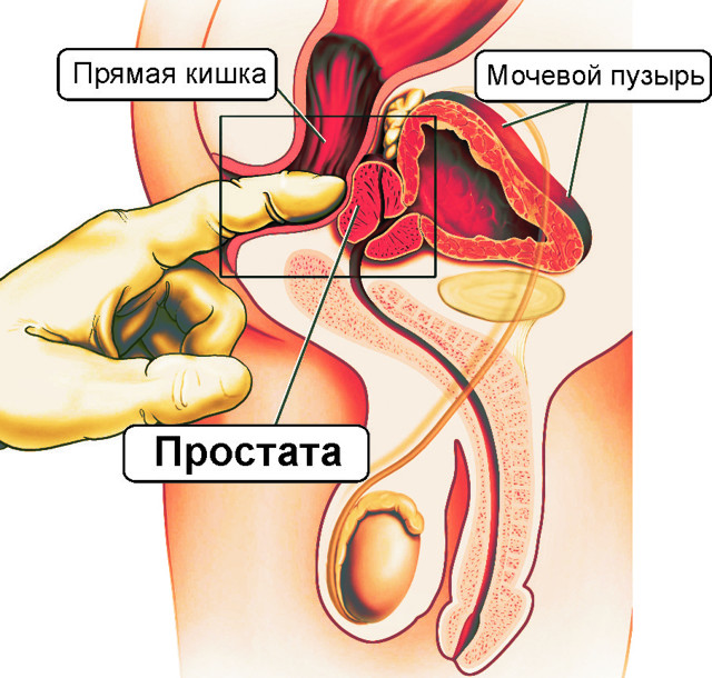Точка g у чоловіків: де знаходиться і методи її стимулювання
